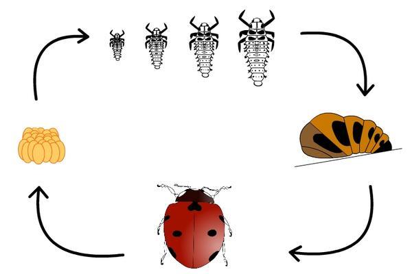 l 39 insecte myst re ecole saint michel jeanne d 39 arc de cugand. Black Bedroom Furniture Sets. Home Design Ideas